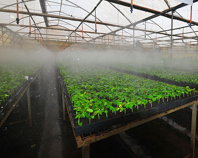 Watering System