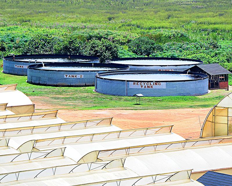 Rosebud Water Tanks