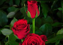 Furiosa Flowers