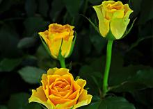 Viva Flowers