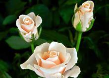 Meera Flowers