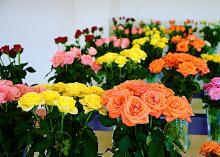 Cheasea & Viva Flowers