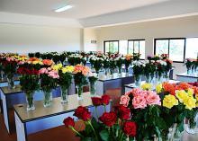 Valentino, Ace pink & Viva Flowers